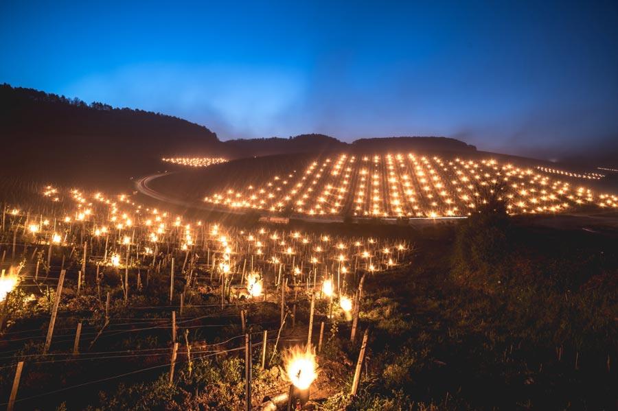 photos evenementiel vente des hospices de beaune vignoble